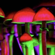 Magic Mushrooms